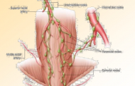 Anorectal Anatomy :قسمت اول اناتومی Rectum