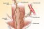 Esophagogastric junction morphology